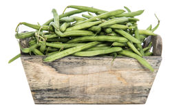 Isolated Green Beans Royalty Free Stock Images