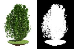 Isolated Green Bush with Detail Raster Mask. Royalty Free Stock Images