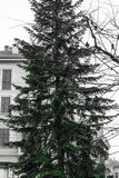 Isolated Green Christmas Tree in City Square Outdoors Milan Ital Royalty Free Stock Image