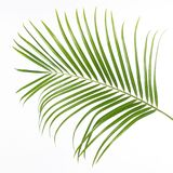 Isolated green fern leaf, white background royalty free stock photography