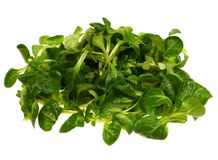 Isolated green field salad Stock Image