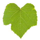 Isolated green grape leaf Stock Image