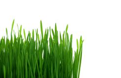 Isolated green grass Royalty Free Stock Photo