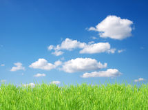 Isolated green grass Royalty Free Stock Photography