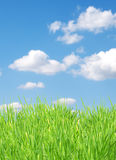 Isolated green grass. On a blue background Royalty Free Stock Images