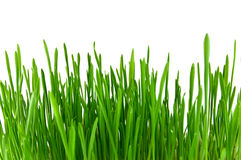 Isolated green grass Royalty Free Stock Images