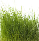 Isolated green grass Royalty Free Stock Image
