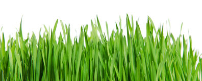 Isolated green grass Stock Images