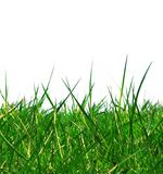 Isolated green grass. Green grass isolated with white copy space royalty free stock photos
