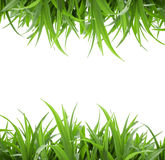 Isolated green grass. Green grass isolated at white background Stock Photography