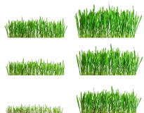 Isolated green grass growing different phases. Green grass growing different phases - isolated on white background stock photo