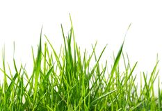 Isolated green grass pattern. Closeup of isolated green grass on white background stock images