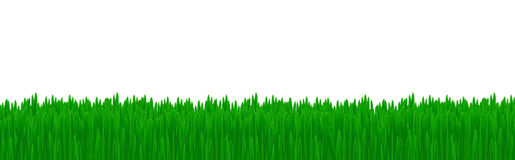 Isolated green grass Stock Photo