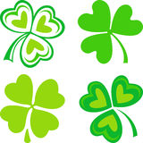 Isolated green Irish shamrocks Stock Photo