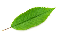 Isolated green leaf Royalty Free Stock Photos