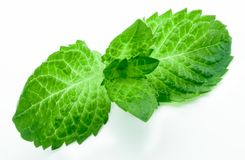 Isolated Green Mint Leaves on white background. Royalty Free Stock Photo