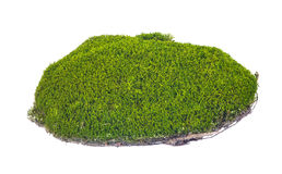 Isolated green moss with brown soil Stock Photography