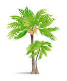 Isolated green palm. Stock Photo