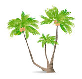 Isolated green palm. Stock Photos