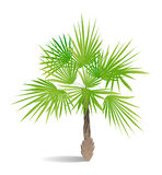 Isolated green palm. Stock Photography