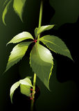 Isolated green plant Royalty Free Stock Image