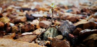 The Isolated Green Plant Grow Up On the Soil and Rock. The growth of green plant in nature stock photos