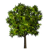 Isolated green tree plant leaves Royalty Free Stock Images