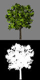 Isolated green tree and plant silhouette Royalty Free Stock Photography