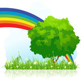 Isolated green tree with rainbow Stock Image