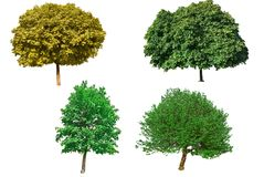 Isolated green trees Stock Photo