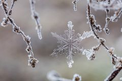 Snowflake and crystal covered branches Stock Photos