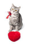 Isolated grey cat with red bow and heart Royalty Free Stock Photography