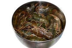 Isolated group of large live gray crayfishes in a metal bowl. Fresh uncooked raw crayfish ready for cooking stock photos