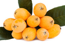 Isolated group loquat fruits Royalty Free Stock Photos
