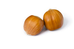 Isolated hazelnuts Stock Photography