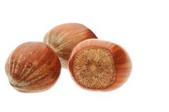 Isolated hazelnuts Stock Image