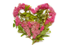 Isolated heart from flowers. On white background Royalty Free Stock Photos