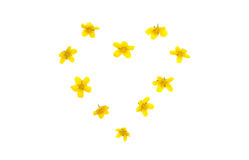Isolated heart of yellow flowers Stock Photo