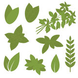 Isolated herb leaf, plant Royalty Free Stock Photo
