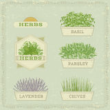 Isolated herbs. Lavender,chives,   parsley,and basil, herbal vintage background Stock Photography