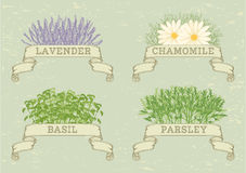 Isolated herbs Royalty Free Stock Images