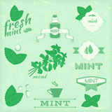 Isolated herbs, mint vector leaves. Set illustration, peppermint background Royalty Free Stock Image
