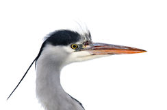 Isolated heron's head Stock Photo