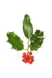 Isolated Holly sprig stock image