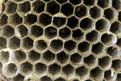 Isolated hornets nest Royalty Free Stock Images