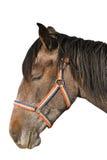 Isolated horse portrait Stock Photos