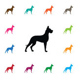 Isolated Hound Icon. Whippet Vector Element Can Be Used For Whippet, Hound, Dog Design Concept. Royalty Free Stock Photography