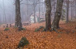Isolated house in the beeches forest in Autumn. Isolated house in the beeches forest / woods/  old house / isolated / stone house / autumn / forest / fallen Stock Photo