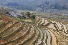 Isolated house among the rice terraces of Sapa in north Vietnam Royalty Free Stock Image