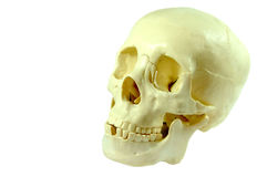 Isolated Human Skull Royalty Free Stock Photo